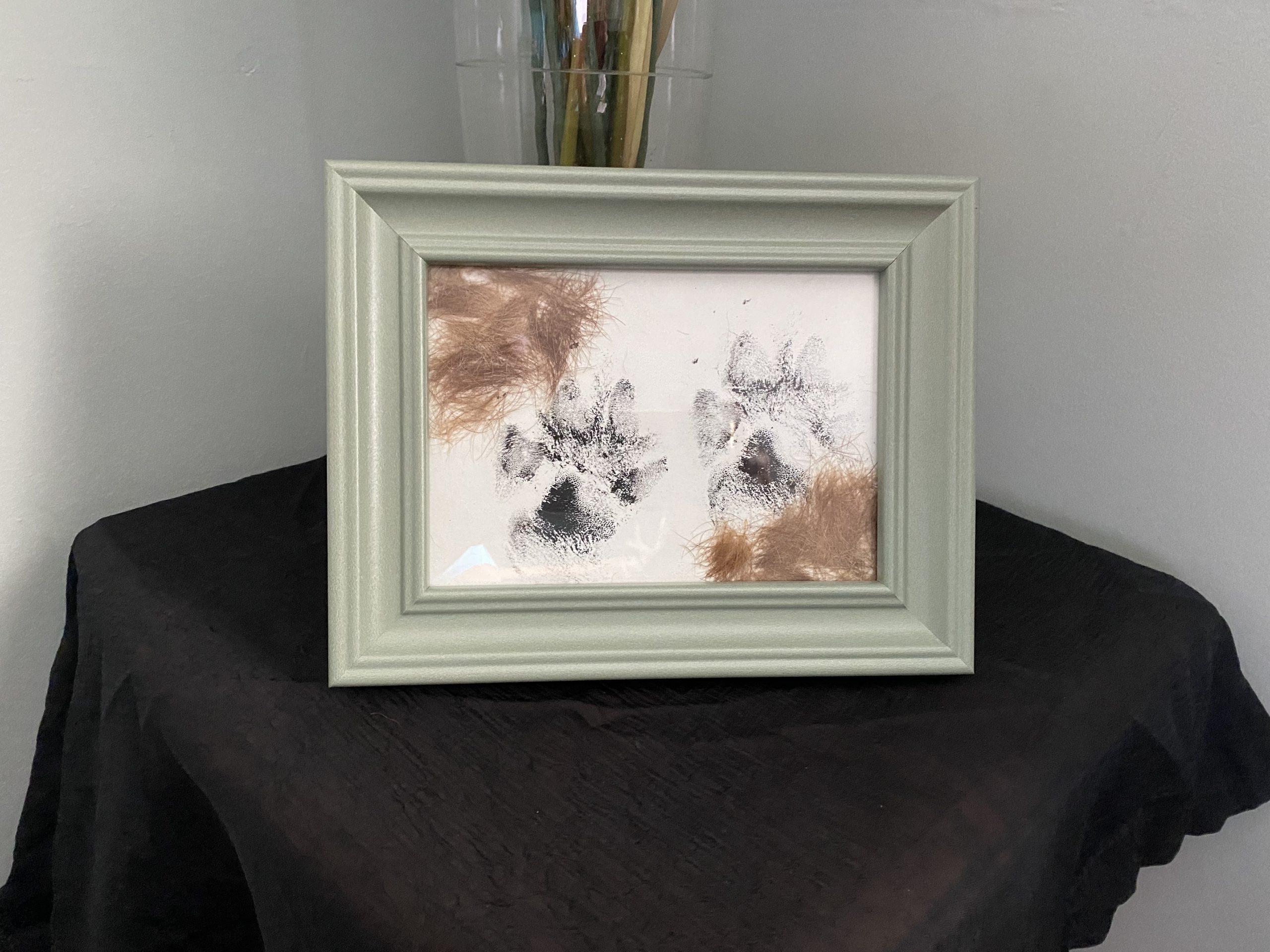 Pawprint plus fur clippings